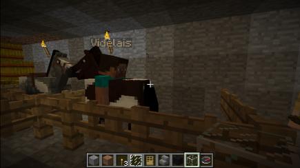 Dan taming a horse